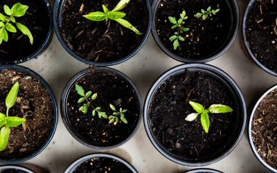 A closer look at ESG investing and how fund managers meet ESG criteria